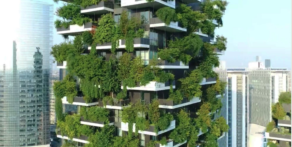leśne domy